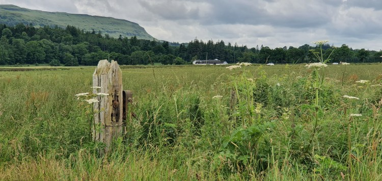 A marshy grassland with semi-natural mixed woodland and hills in the background. Ecology reports for planning look at habitats such as this and characterise their likelihood for use by protected or notable species.