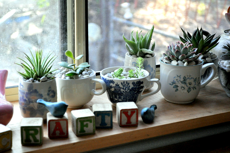 Teacup Succulents