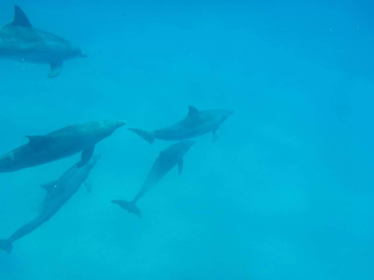 dolphin tour