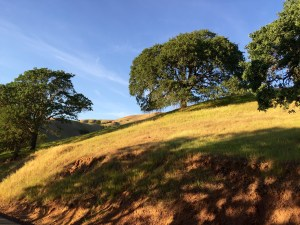 Park landscape on Mt. Diablo