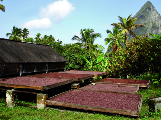 Chocolate Tours In St Lucia