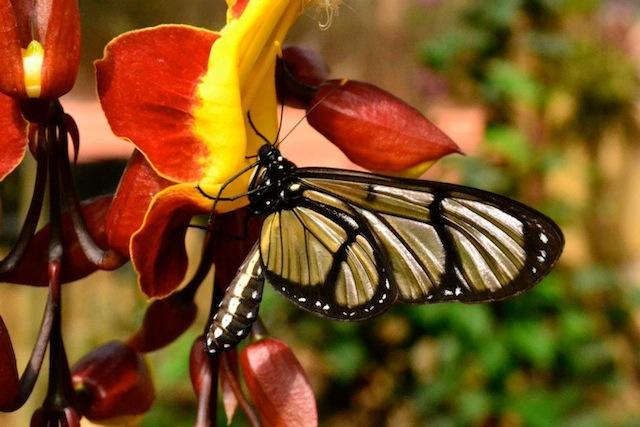 butterfly222