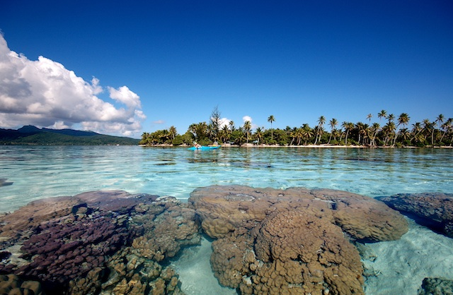 Vahine Private Island Resort and nearby corals