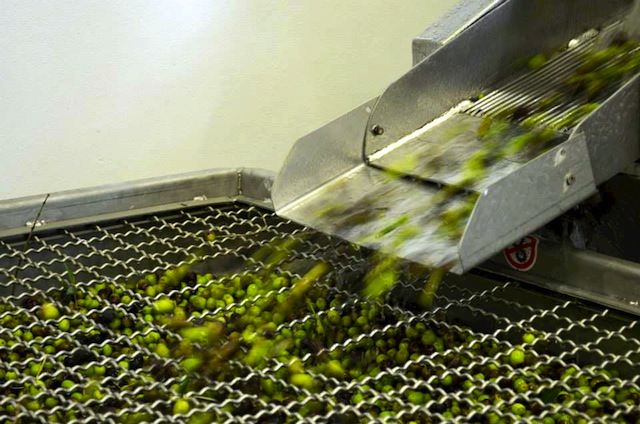 olives shooting out of machine