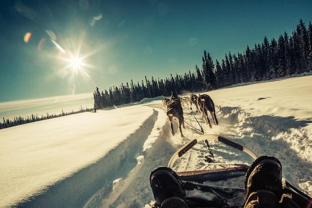 Alaskan dogsled tour with Gondwana