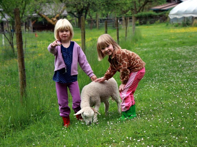 Playing with animals at Leaping Lamb Farm