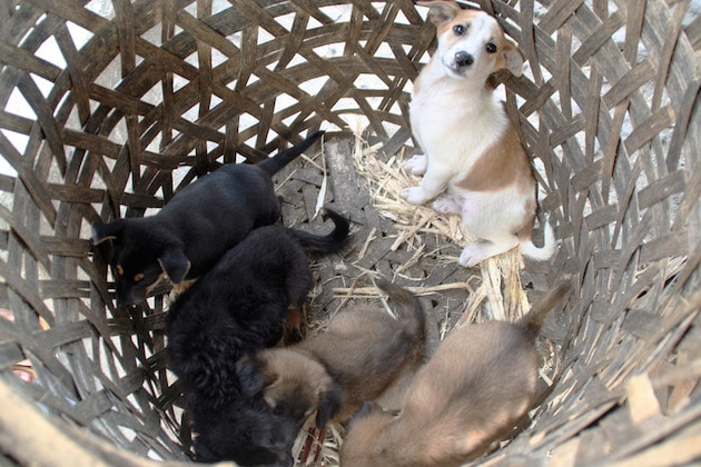 Puppies sold as pets are commonly found in barrels