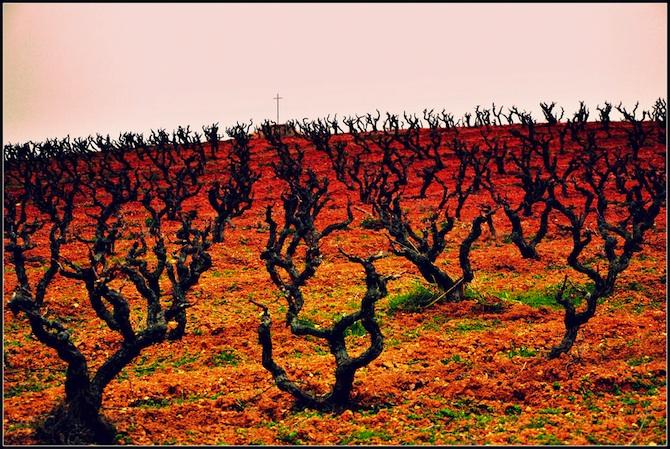 penedes vines