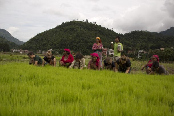 Rice planting with host families