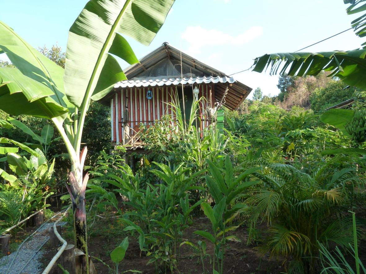 rsz_organic_farm_in_jungle_thailand