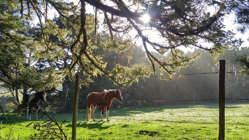 california farm stay