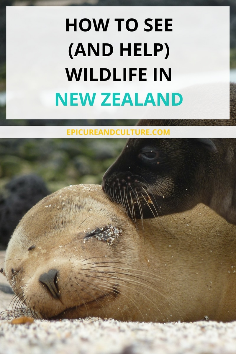How to see and help wildlife in New Zealand