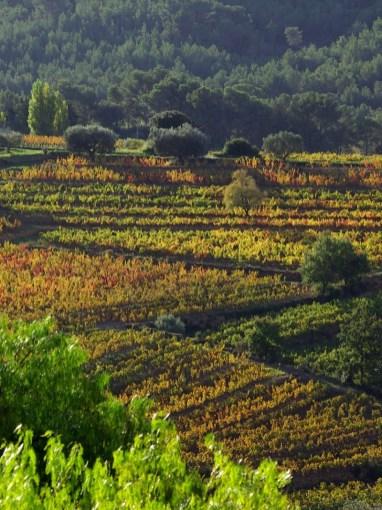 Château Canadel | Les vignes en restanques | www.epicuriendusud.com