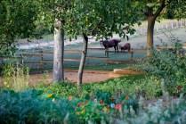 Bastide de Moustiers | Le jardin et pré | Photo David Bordes