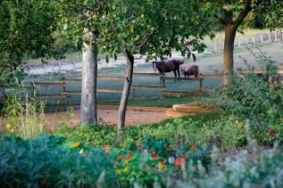 Bastide de Moustiers   Le jardin et pré   Photo David Bordes