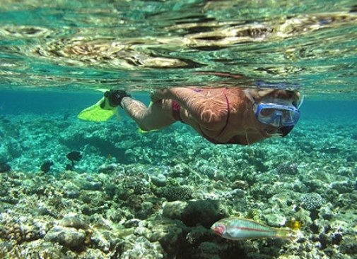 Enjoy Snorkeling at 3 islands Gilis
