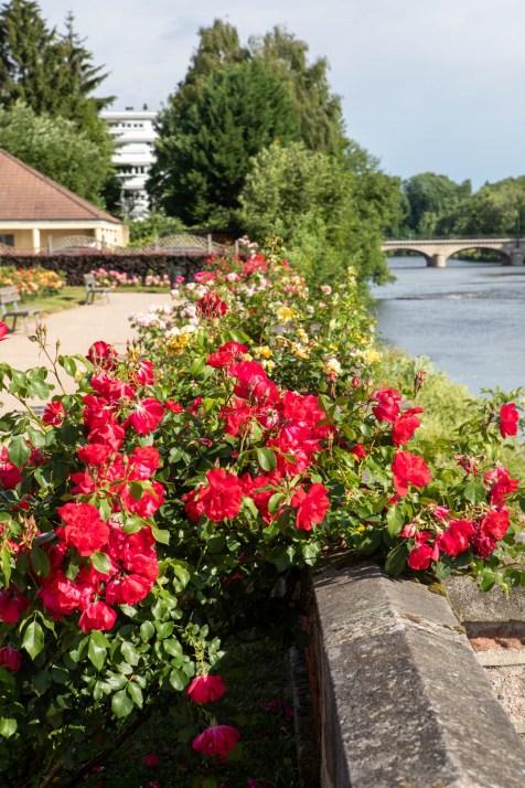 fleurissement-roseraie (1)