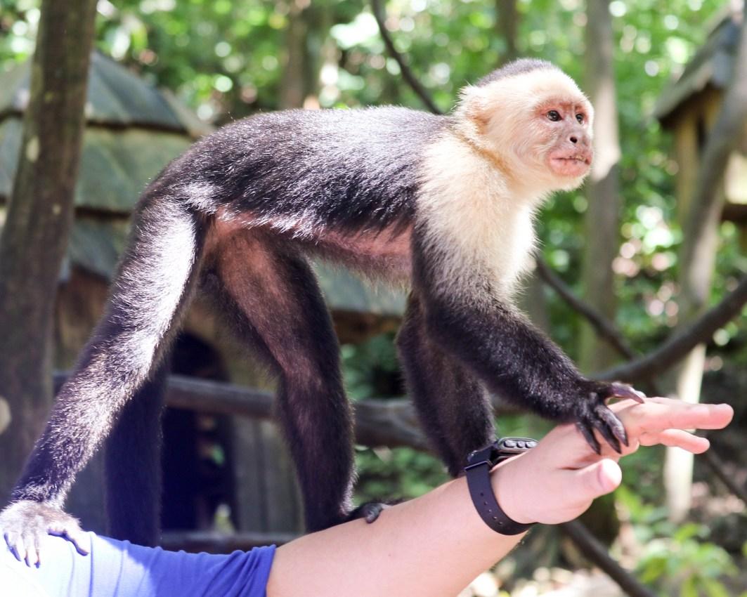 Roatan Monkeys (17 of 29)