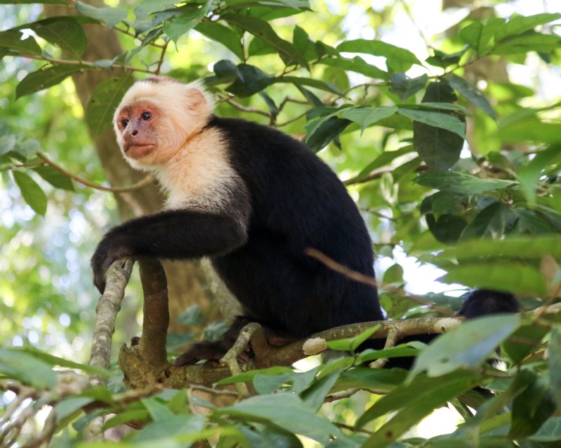 Roatan Monkeys (3 of 29)