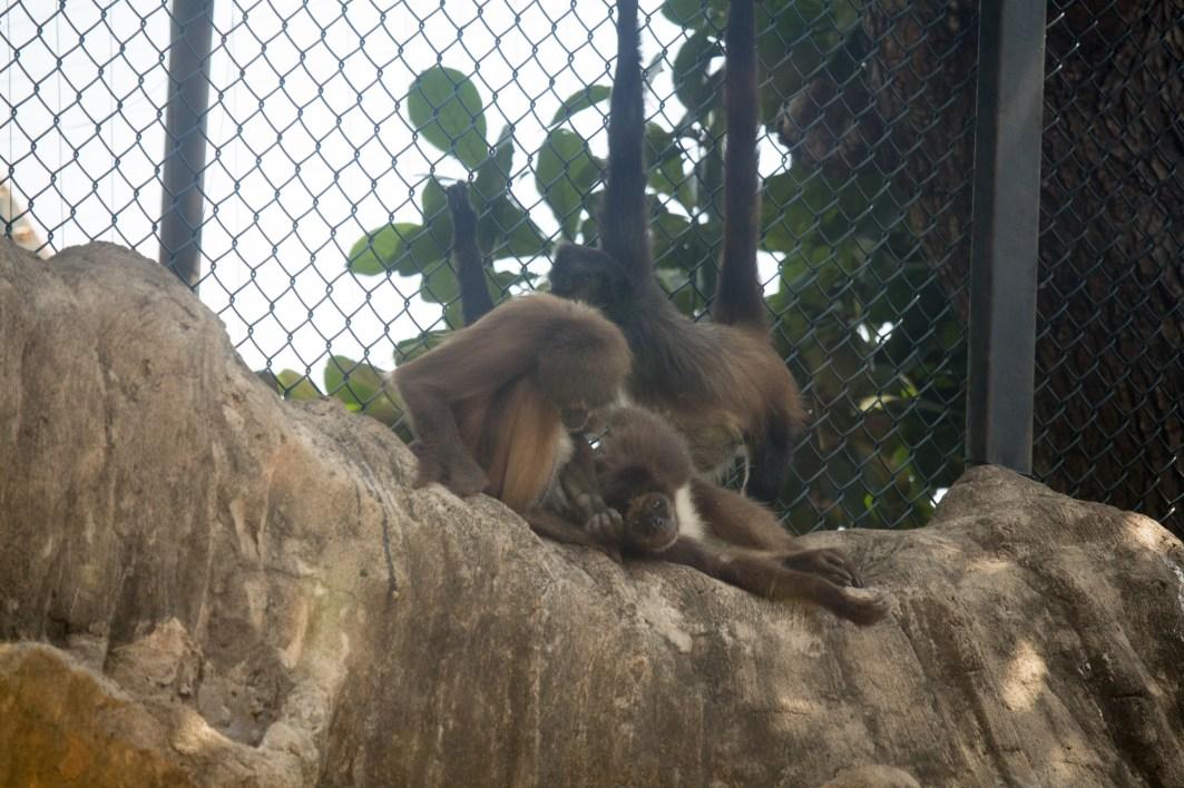 4Jul15_Barranquilla_Zoo-13