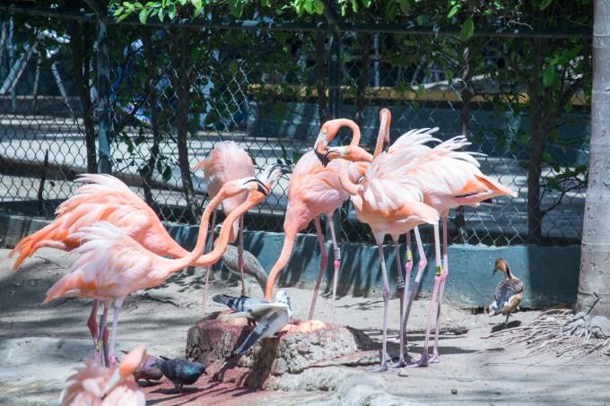 4Jul15_Barranquilla_Zoo-27