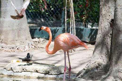 4Jul15_Barranquilla_Zoo-29