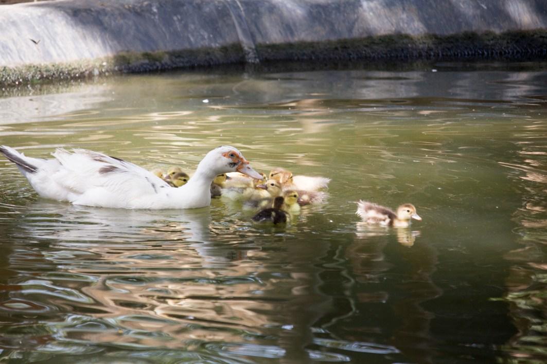 4Jul15_Barranquilla_Zoo-43