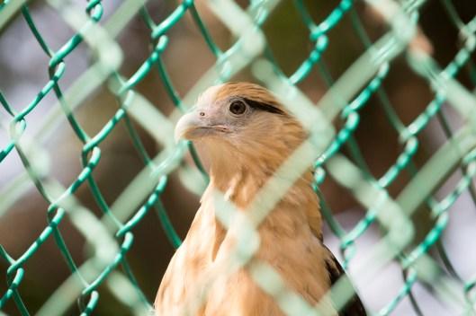 4Jul15_Barranquilla_Zoo-57