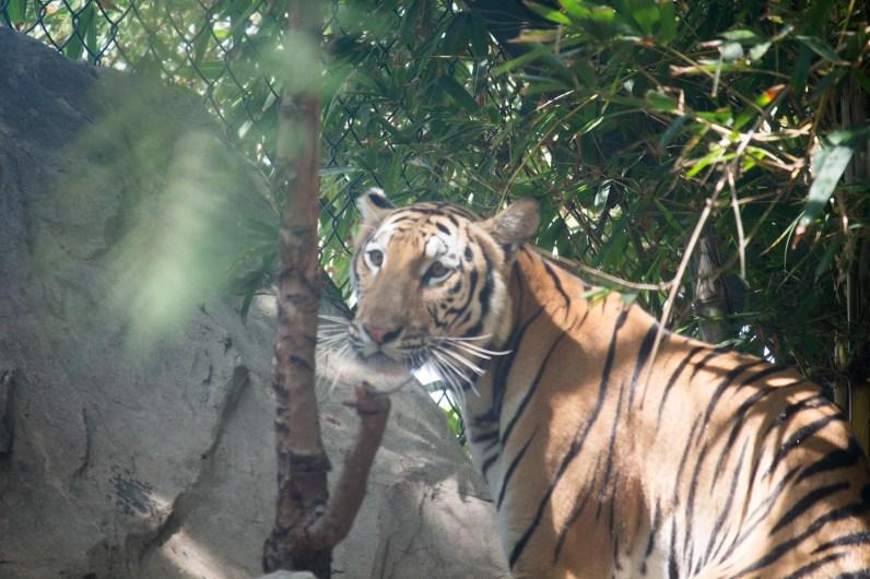 4Jul15_Barranquilla_Zoo-64