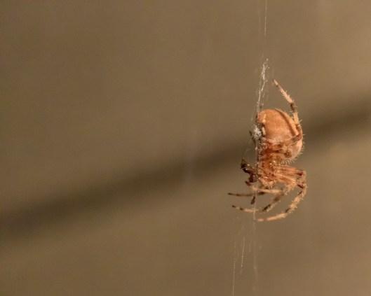Spider_27AUG15-6