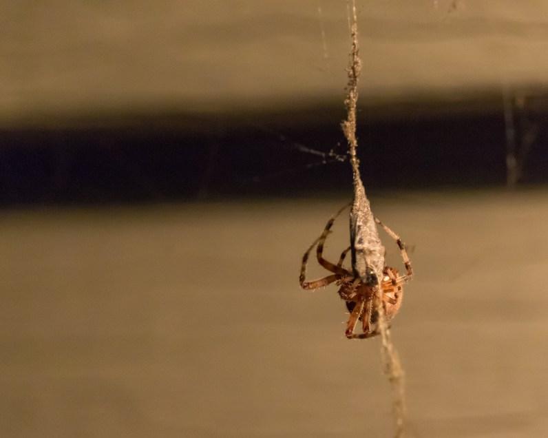 Spider_27AUG15-7