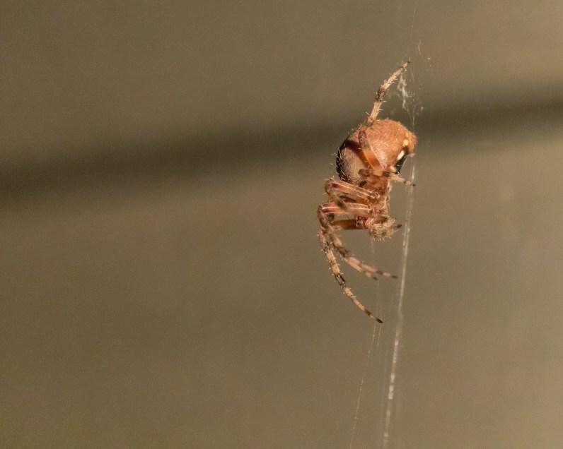 Spider_27AUG15-8