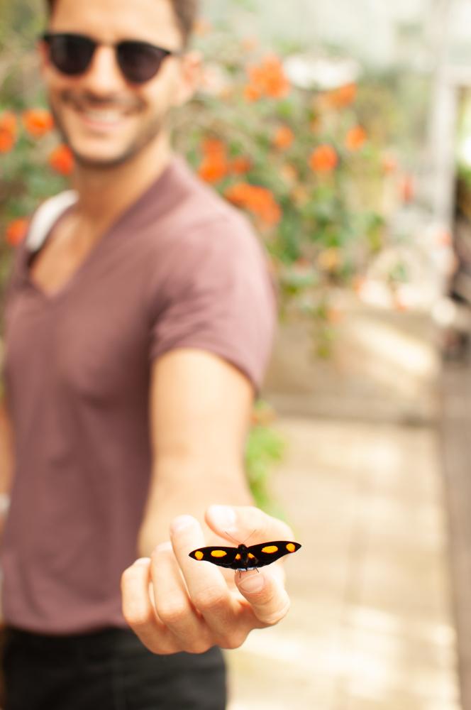 Schmetterlingshaus Kopenhagen