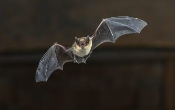 EPM Talk Ep. 8 – Bat Bite on Butt and An Easy Decision