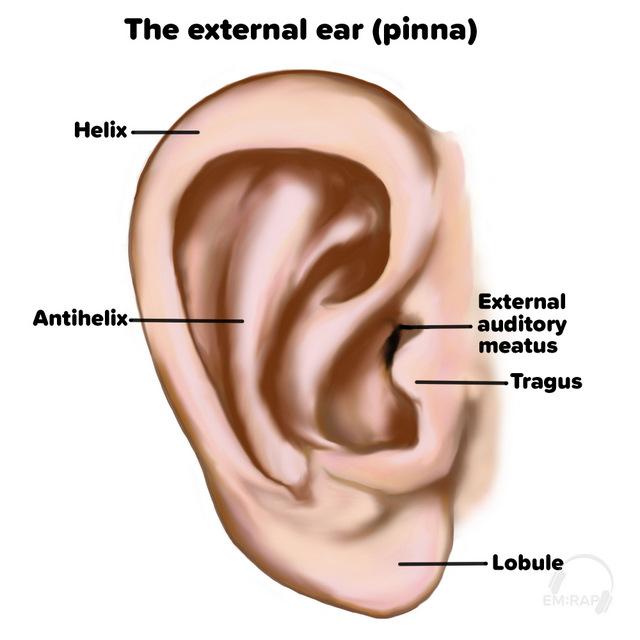 External ear anatomy_GSmith-wm
