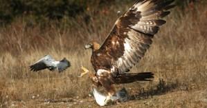 Rafinovaní zabijáci: 10 loveckých technik zvířat