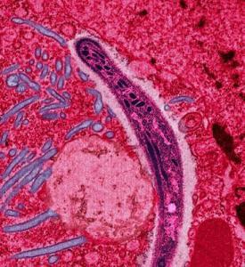 Je očkování proti malárii na dosah?