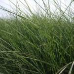 Češi s protinožci šlechtí odolnější traviny!