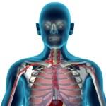 Invaze parazitů: Kdo všechno žije v našem těle?