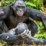 Posedlí sexem: Zvířata, která milují erotické radovánky více než lidé!