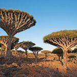 Hororová podívaná: Stromy, které krvácejí