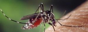 Komár, největší zabiják současnosti!