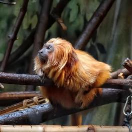 Zoo Ústí nad Labem: Zvířátka na svahu Mariánské skály