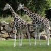 Zoologická a botanická zahrada v Plzni: Domov pro zvířata i rostliny