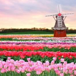 Květinový ráj vNizozemí