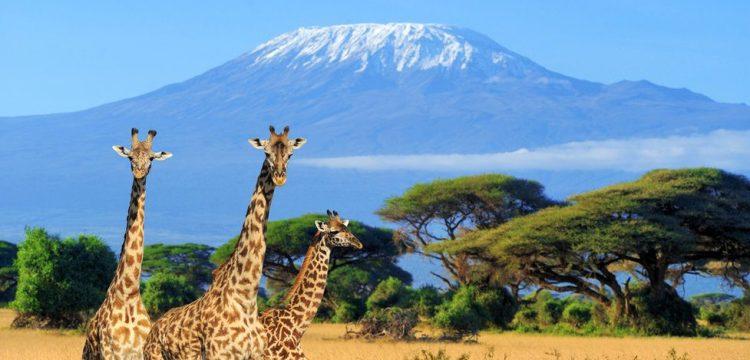 Gigant Kilimandžáro: Africké schody do nebe