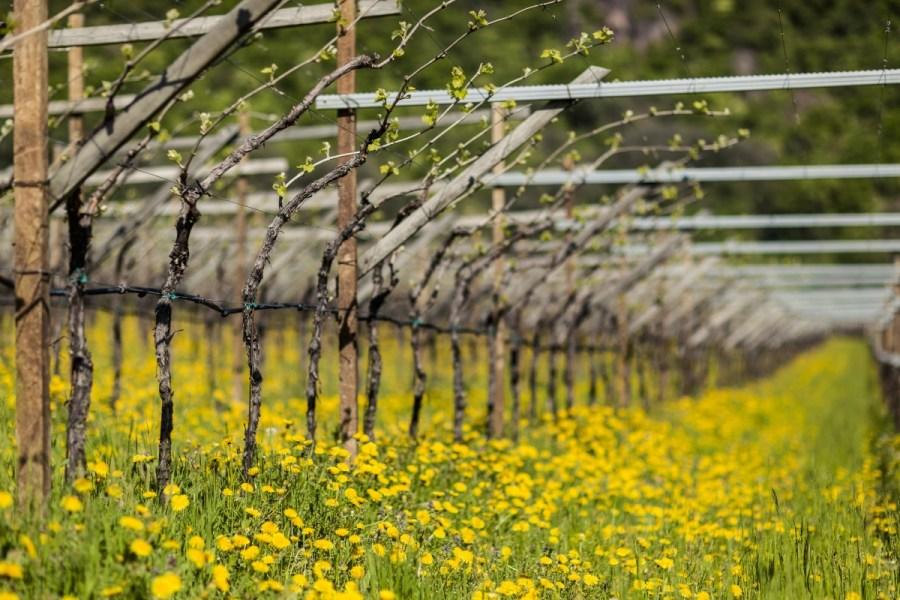 Barevné imprese jihotyrolského jara