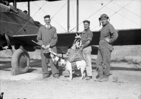 No one can say for sure who the first dog to parachute was. This undated photo (most likely from between 1920 and 1924) shows members of the Colorado Air National Guard with dog Jeff, wearing his parachute. After making several successful jumps, he was killed in August 1924, when his chute failed to open. Jeff, the mascot of the 120th observation squadron of the Colorado Air National Guard, shown wearing his parachute / photo by Harry M. Rhoads.Rhoads, Harry Mellon, 1880 or 81-1975.CREATED/PUBLISHED[between 1920 and 1924?]SUMMARYMembers of the Colorado Air National Guard, Jimmy Ziegler (center), Danny Kearns (right), and unidentified man, pose next to an airplane and Jeff the dog outfitted with a parachute in Denver, Colorado.NOTESTitle and