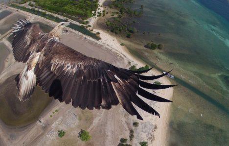 Hlavní cenu vprvním ročníku soutěže získal tým fotografů pracující pro národní park Bali Barat na indonéském ostrově Bali. Tým používal dron knatáčení celkových záběrů, když si fotograf všiml, že stroj pronásleduje orel. Trochu manévrování ataky štěstí pak přispělo ke vzniku opravdu úžasného snímku.