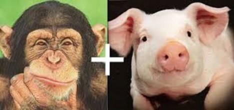 Jsme mixem těchto dvou zvířat?